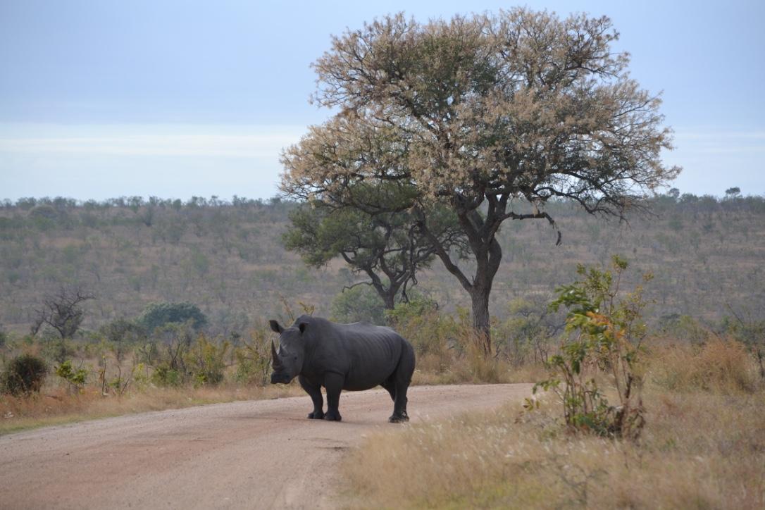 Roadtrip i Sydafrika & Krugerparken